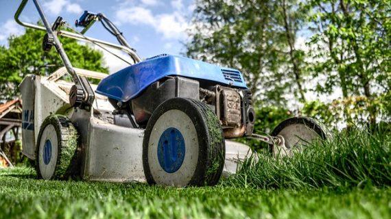 מטפחים את הגינה עם גנן מקצועי