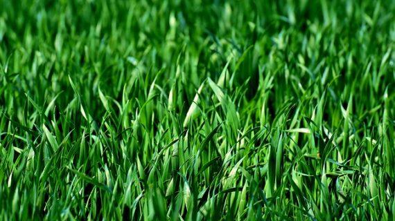 מה זה בעצם דשא סינטטי